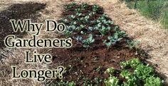 Why Do Gardeners Love Longer- several reasons
