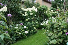Plants, Garten, Planters, Plant, Planting
