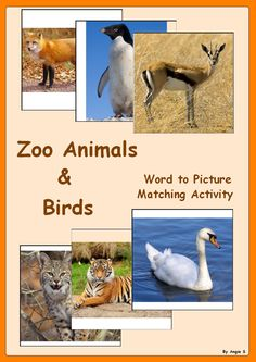 Zoo Animals & Birds Word to Picture Matching Activity- 50% off the first 48 hours! For more resources follow http://www.pinterest.com/angelajuvic/angie-s-tpt-store/