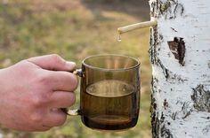 Aplicații externe cu SEVĂ de MESTEACĂN care dau efecte uluitoare - Top Remedii Naturiste