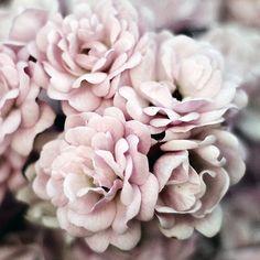 Image via We Heart It https://weheartit.com/entry/87176274/via/388527 #beauty #cute #decor #flowers #purple