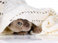 WRAPPED IN LOVE: BLANKETS FOR SHELTER PETS