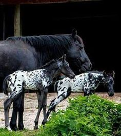 https://www.facebook.com/Horseaddict/photos/a.141436515918225.26411.124980880897122/921426317919237/?type=1