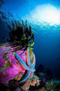 Beauty of the Sea