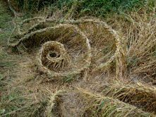 "This photograph of Sarah Kavage's ""Braided Grass"" art was taken in August, by John Reinke. It's one of many photographs. A rare natural art installation, Sarah's work is discovered on the Sammamish River Trail just south of the 116th Street Bridge. ""Braided Grass"" was woven for the City of Redmond."