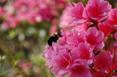 bee in the hunt