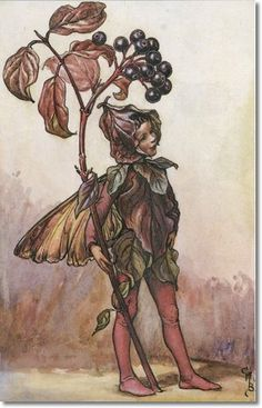Cicely Mary Barker - Flower Fairies of the Autumn - The Dogwood Fairy