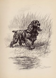 COCKER SPANIEL Dog Print Beautiful Cocker Spaniel by plaindealing