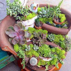 These Broken Pot Fairy Gardens Are Absolutely Stunning