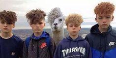 Cosas que pasan cuando eres una alpaca emo: | 19 Cosas que comprueban que internet siempre te podrá hacer reír