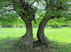Image result for forest single trees