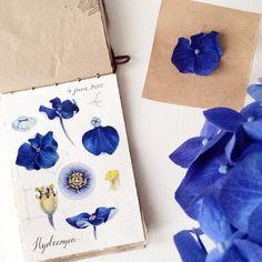 Soon... Hydrangea. :) One of my favorite flowers || #limkina #limkina_art || Schmincke and Winsor&Newton watercolors, Kolinsky sable paintbrushes || Скоро. Гортензия. Пожалуй, один из любимых цветков.