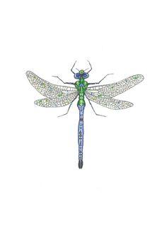 Emperor Dragonfly print of original watercolor. $16.00, via Etsy.
