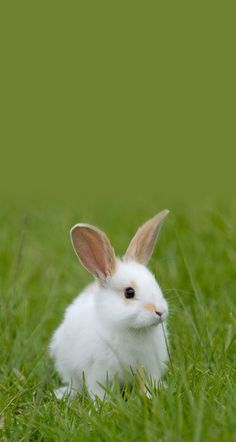 Super Cute Animals, Cute Baby Animals, Farm Animals, Animals And Pets, Funny Animals, Cute Baby Bunnies, Cute Babies, Cutest Bunny Ever, Rabbit Colors