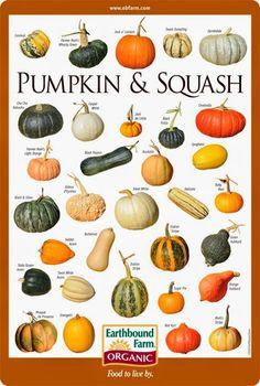 101 Gardening: Pumpkin & Squash Varieties Chart