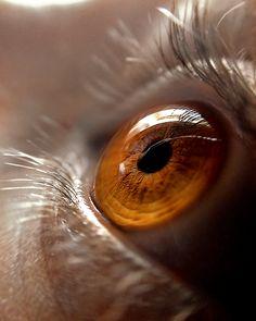 The Eye.  Photo by ~Rangia via Deviantart (http://browse.deviantart.com/?order=9=eye=120#/dqu276).