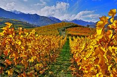 Italy's Piedmont: beyond Barolo and Barbaresco
