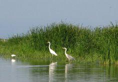 delta dunarii animale