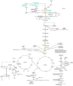 Biochem Pathways, wish I would have had this before today lol