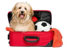 When you've spent two weeks driving 4,153 miles / 6,684 kms with a dog, you learn a practical thing or two along the way! Eleven Tips for a Dog on a Road Trip