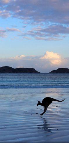 Lucky Bay, Esperance, Western Beautiful Cities in Australia West Australia, Australia Travel, Melbourne Australia, Australia Funny, Australia Photos, Queensland Australia, Wild Life, Places To Travel, Places To See