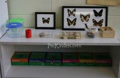 preschool science exporation area - rotated theme based but always 'real' items. sort of a basic idea for the 'nature museum' we need to chat about @Liz Huereque Deimeke