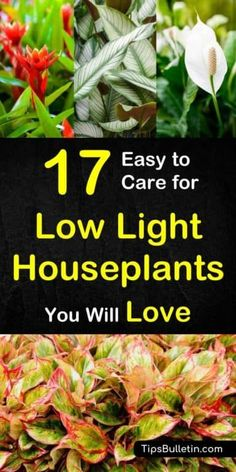 Discover easy to care for low light houseplants. Evergreen plants with little need of sunlight might even survive extended dark times. Perfect to cleanse your air. Can be used in hanging baskets. Includes peace lily, boston ferns, and lucky bamboo. #houseplants #lowlight #nosunlight #dark #plants