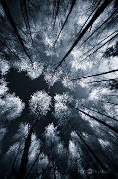 Black Woods by Joni Niemelä on 500px
