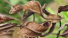 23-camouflages-spectaculaires-danimaux-qui-ne-manquent-pas-de-talent14