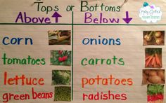 "Making an informational T-Chart for ""How Does Your Garden Grow?"" using real…"