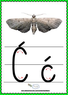 Alfabet Moth, Alphabet, Insects, Asia, Montessori, Animals, Yarns, Full Bed Loft, Animales