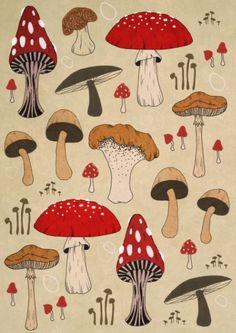 Mushrooms byLynette Sherrard Illustration And Design