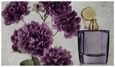 Карл Бредл (Karl Bradl), один из основателей Aedes de Venustas, объяснил, что вдохновением для Oeillet Bengale стала роза вида вида Rosa Indica Caryophyllea, изображенная на рисунке французского ботаника Pierre Joseph Redoute (1759-1840).  В композиции собраны ноты: бергамота, черного перца, корицы, кардамона, пряной гвоздики, шафрана, куркумы, имбиря, цветка гвоздики, розы, иланг-иланга, толуанского бальзама, ванили, бензоина, лабданума.
