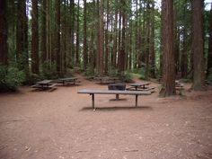 ROB: Huckleberry Picnic Area (100) -  eight 10-ft tables, one 10 ft serving table, an extra-large BBQ, and a drinking fountain with a spigot. It's a very shady site in a Redwood grove. Restrooms are walking distance.