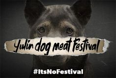 In June the Chinese will hold their annual Yulin dog meat festival. Around dogs will be slaughtered. Stop the Yulin Dog Meat Festival. Yulin China, Dog Charities, A Level Textiles, Stop Animal Cruelty, The Time Is Now, Dog Eating, Animal Rights, Charity, Dog Cat