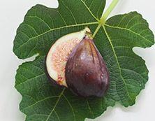 Fig Tree, Savor the sun-warmed sweetness of fresh fig. Juicy, earthy and incredibly flavorful. Fresh Figs, Fig Tree, Earthy, Tea Lights, Candles, Memories, Sun, Ficus, Memoirs