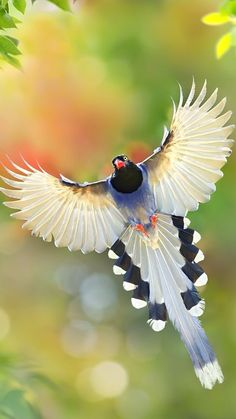 All Birds, Cute Birds, Pretty Birds, Exotic Birds, Colorful Birds, Beautiful Creatures, Animals Beautiful, Most Beautiful Birds, Tier Fotos
