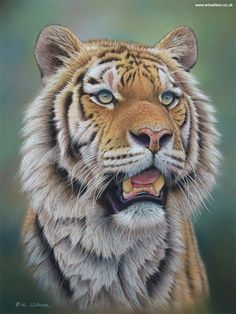 15 Realistic Pastel Paintings of Animals from Eric Wilson #Art #AnimalArt #Tiger