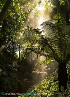 Light in a Rainforest by Alfredo Costanzo