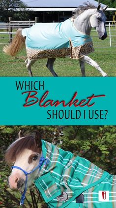 Jeffers Equine has constructed a complete horse blanket guide to ensure that you are properly choosing, fitting and caring for your horse blanket. My Horse, Horse Riding, Horse Fly, Barbie Horse, Horse Care Tips, Winter Blankets, Types Of Horses, Horse Supplies, Pet Life