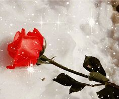 Decent Image Scraps: Rose Animation Beautiful Gif, Beautiful Roses, Beautiful Pictures, Diwali Greetings, Valentines Day Greetings, Friendship Day Greetings, Dussehra Greetings, Roses Gif, Single Red Rose
