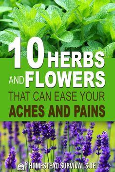 Healing Herbs, Medicinal Plants, Natural Healing, Herb Plants, Herbs Garden, Gardening Vegetables, Natural Herbs, Garden Paths, Container Gardening