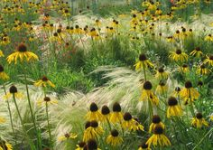Inspired by Nature [echinacea and grasses] . Great simplicity with incredible texture[echinacea and grasses] . Great simplicity with incredible texture Prairie Planting, Prairie Garden, Meadow Garden, Dream Garden, Border Plants, Design Jardin, Garden Borders, Parcs, Herbs