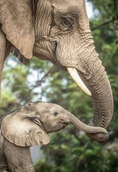 Wonderful shot of elephant and baby Elephant Quilt, Elephant Love, Elephant Art, African Elephant, Elephants Photos, Elephant Pictures, Funny Animal Pictures, Cute Wild Animals, Animals Beautiful