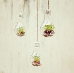 Creative bulb hanging transparent glass vase vase hydroponic micro-landscape home decoration vase 2013 NEW-ZZKKO