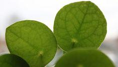 Top 10 air-purifying houseplants