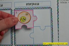 Mitosis Puzzle Activity by Common Core Materials