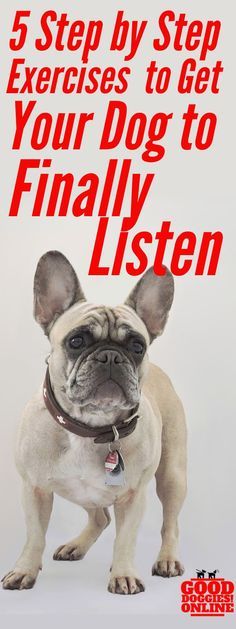 If you're tired of your dog not listening, check out these 5 step by step video instructions and get your dog to start listening when you call. #dogs #dogtraining