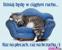 Cute Things for Cats Crazy Cat Lady, Crazy Cats, Bon Week End Image, Cat Couch, World Cat, Dibujos Cute, Cat Sleeping, Sleeping Beauty, Here Kitty Kitty