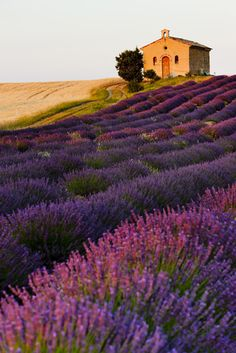 Plateau-De-Valensole-Provence-France, just one of the beautiful scenes afforded by exploring this beautiful region!  Can you picture yourself there yet?